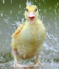 """Yeh, It""""s What You Call 'Duck Weather!'"""