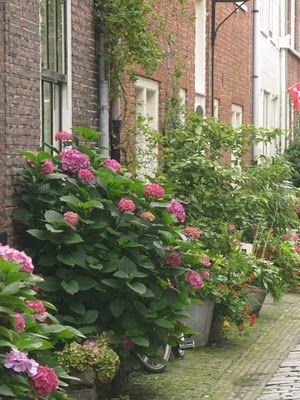 17 beste idee n over tuinieren in potten op pinterest groenten kweken glastuinbouw en paprika - Groenten in potten op balkons ...