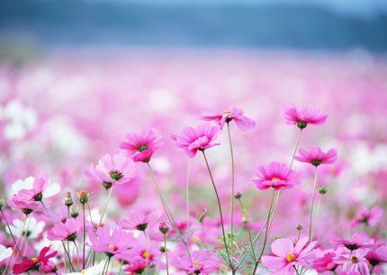 """Муж подарил море цветов! Вывез в поле, сказал: """"Всё твоё, собирай!!!"""""""