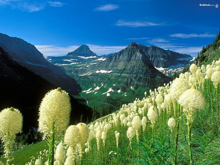 Bear Grass in its natural habitat