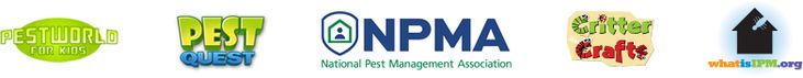 Mouse in your house?: Simple tips to control mice and rodents – PestWorld