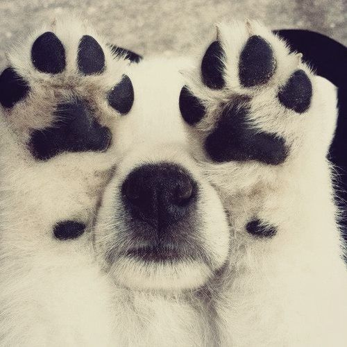 Puppy paws ♥ - how cute would this be painted on a stone?