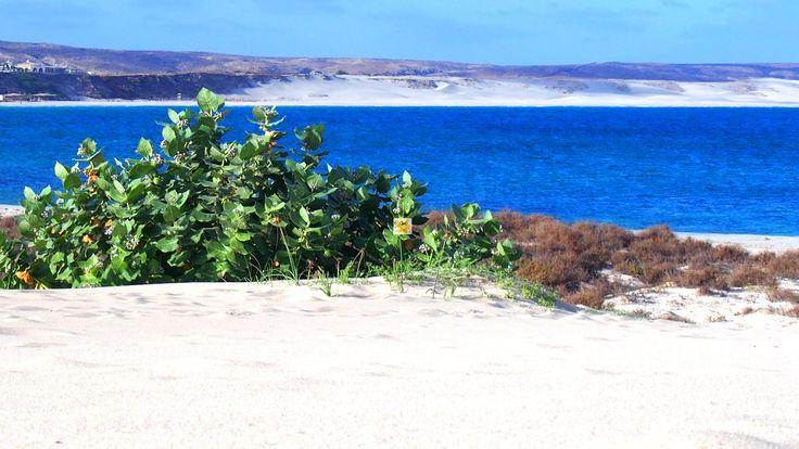 #Kapverden #Urlaub auf #BoaVista (schöner Ausblick) oder der #Insel #Sal (Insel des Salzes) gilt als gewisser #Geheimtipp unter den besonderen #Reisezielen. Das können wir nur bestätigen. Um es selbst einmal zu erleben, hier online zu besten Preisen den nächsten #Urlaub buchen www.BoaVistianer.de