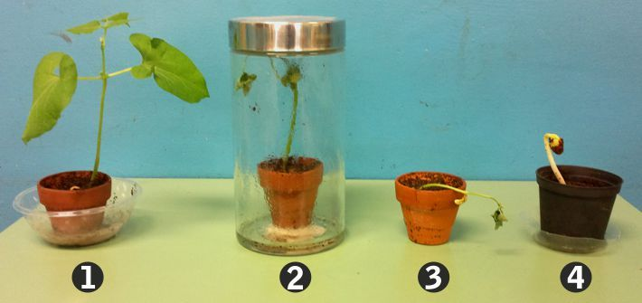 Esperimento fotosintesi