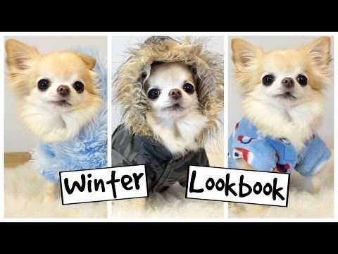 20 best dog grooming hacks that save time and money images on cute puppy sized chihuahua models tiny dog clothes doggroominghacksthatsavetimeandmoney solutioingenieria Choice Image