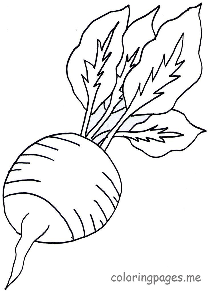 16 best Lettuce Turnip the Beet