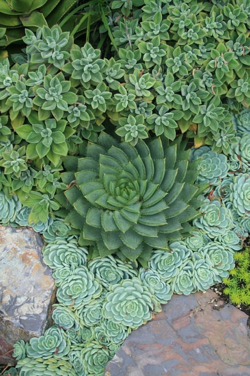 Ideas, Garden Design, Landscape Design, Green, Beautiful, Succulent Gardens, Succulent Plants, Gardens Design, Landscapes Design