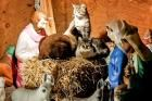 Feral Cats Take Over Nativity Scene, to Delight of Red Hook Neighbors - DNAinfo.com New York