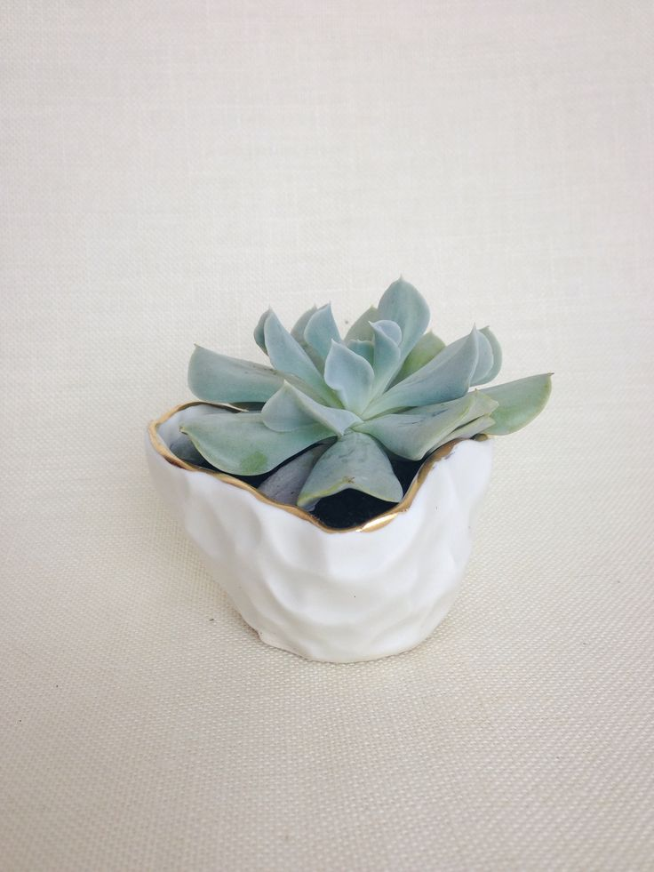 FOR THE GIRL BOSS: Handmade ceramic vessel Ideal for a little air plant or succulent Made of porcelain and glazed with a matte buttery smooth glaze Finished with 22k gold on rim Measures approximately 2 inches tall by 2 1/2 inches wide at top Sizes may vary due to its handmade nature Food safe Hand wash recommended THIS