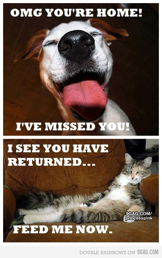 The difference between cats and dogs: Dog Person, Giggle, Animals, Dogs, Truth, Dog Cat, Funny, So True