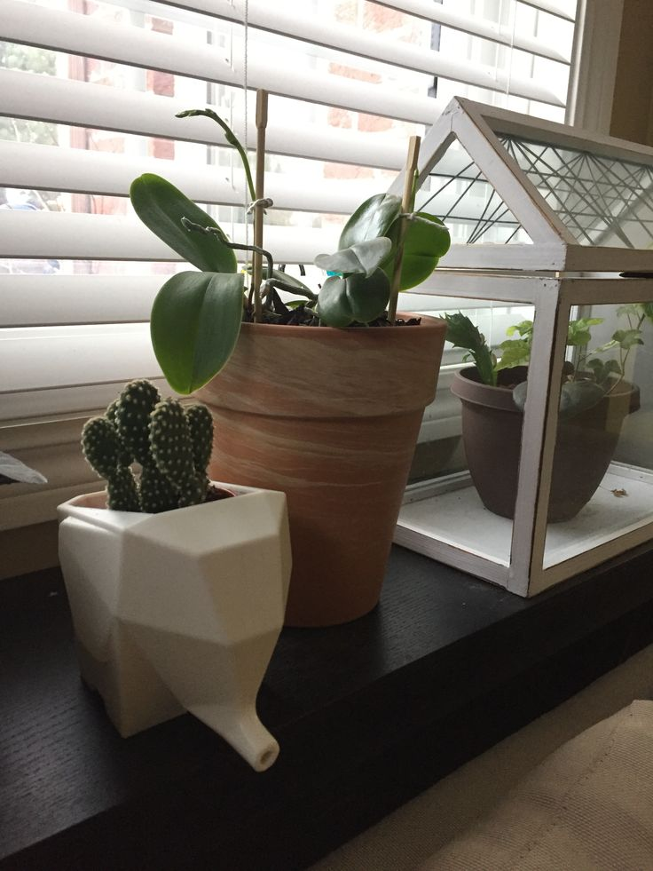Bunny ear cactus, miniature orchids