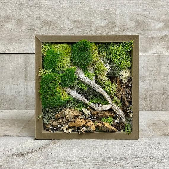 Diy Moss Wall Frame Wilderness Real Living Moss Preserved Etsy In 2021 Moss Wall Moss Wall Art Live Plants