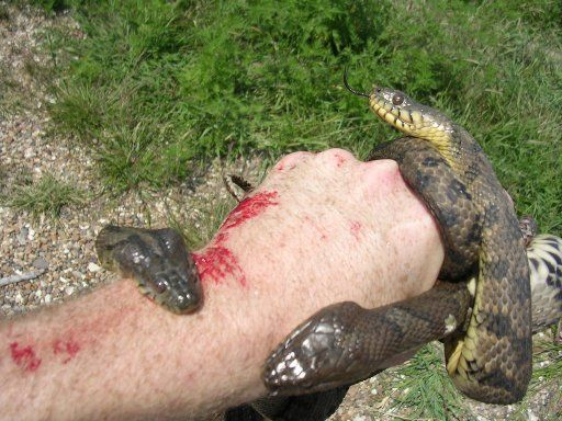 25 Best Poisonous Snakes Ideas On Pinterest Pics Of Snakes Colorful Snakes And Snake Hides