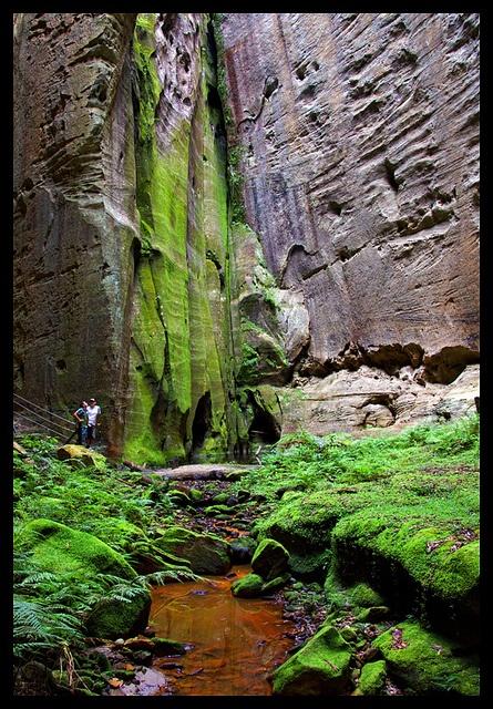 The Amphitheatre - Carnarvon Gorge.  I love this place.