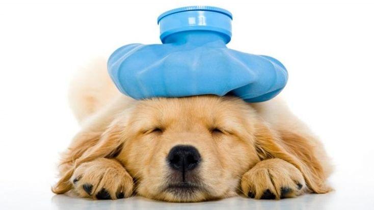 Dog Flu Symptoms: How To Recognize Canine Influenza