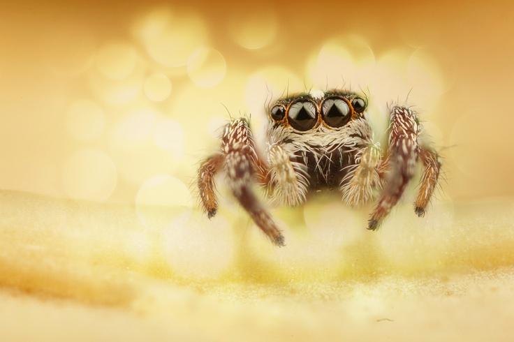 ow pleasssseee.. pretty please... pretty please with a cherry on top!??  Ok.. Ok.. I pin a spider on my cute little animal board...   Spider by Ömer Alp Evirgen, via 500px