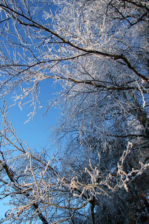 Frosty branches - Lumiloska.blogspot.fi (my snow photography blog)