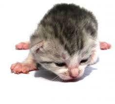 gatitos recien nacidos - Buscar con Google