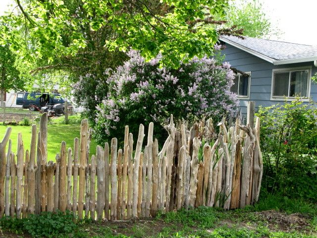 "this is a ""neat"" driftwood fence"