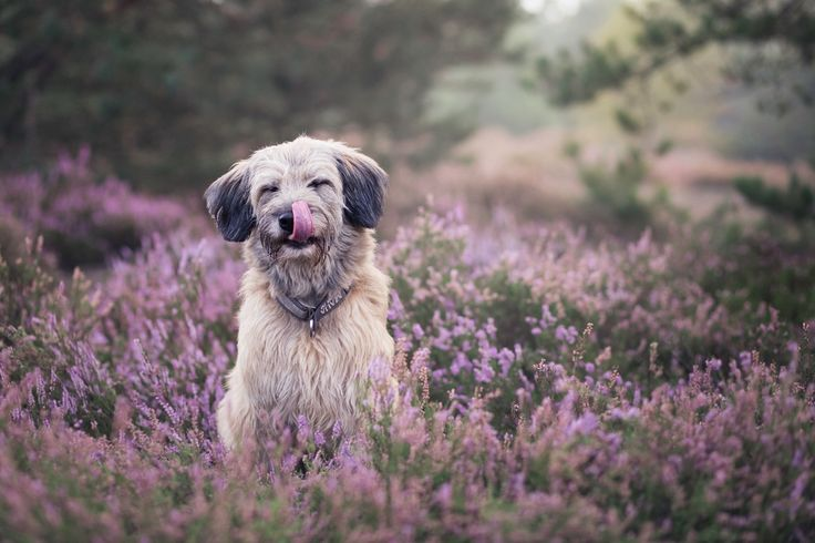 Azalia - More dog pictures: https://www.facebook.com/SnapDogPL/