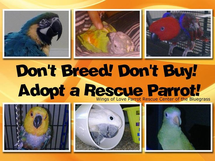 Wings of Love Parrot Rescue Center of the Bluegrass, Inc. Home Page