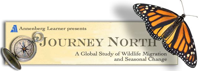 """Journey North engages students in a global study of wildlife migration and seasonal change. K-12 students share their own field observations with classmates across North America. Find migration maps, pictures, standards-based lesson plans, activities and information. Widely considered a best-practices model for education, Journey North is the nation's premiere """"citizen science"""" project for children. The general public is welcome"""