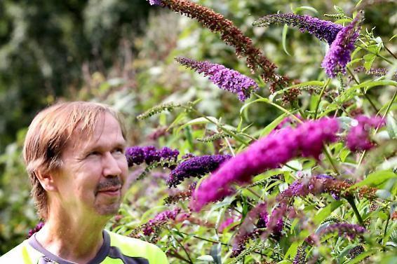 Puistotyönjohtaja Jouni Sunin mukaan ihmiset ovat löytäneet hyvin Perhospuiston, Paavolantie, Riihimäki.