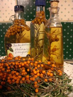 Sea Buckthorn Berry - What is it & what can I do with it?~ via www.seabuckthorninsider.com/health-benefits/what-is-sea-buckthorn-and-what-can-i-do-with-it/