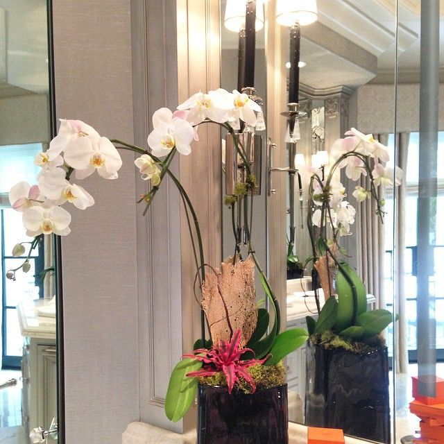 Fresh orchids in the bathroom. #orchids #flowers #inspiration #housedecoration #hanhhomedecoration #interiordecor