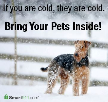 Warm Medicine For Dogs Pet Smart