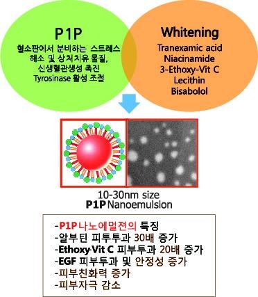 P1P멜라케어의 미백효능 기전
