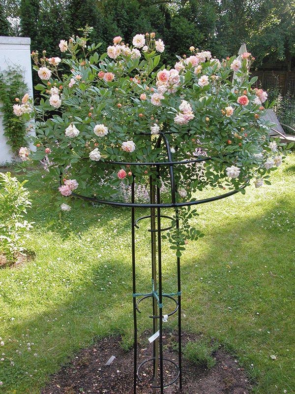 Rosenschirm Giverny - www.classic-garden-elements.de - Garten Obelisken, Rosenbögen, Rosenlauben, Rankhilfen