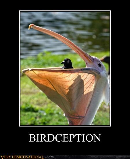 BIRDCEPTION http://chzb.gr/WOINp2 BIRDCEPTION