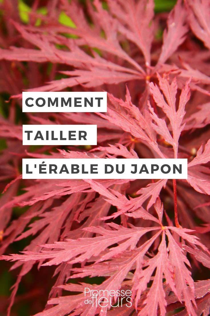 Les 25 meilleures id es de la cat gorie arbre japonais sur - Comment tailler un erable ...