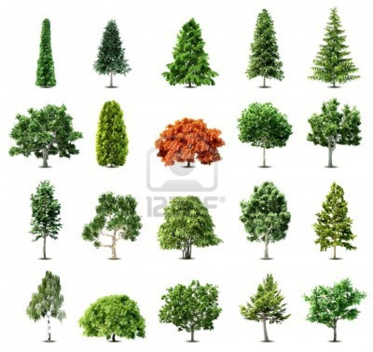 72 best RBOLES images on Pinterest  Drawing trees Drawing and