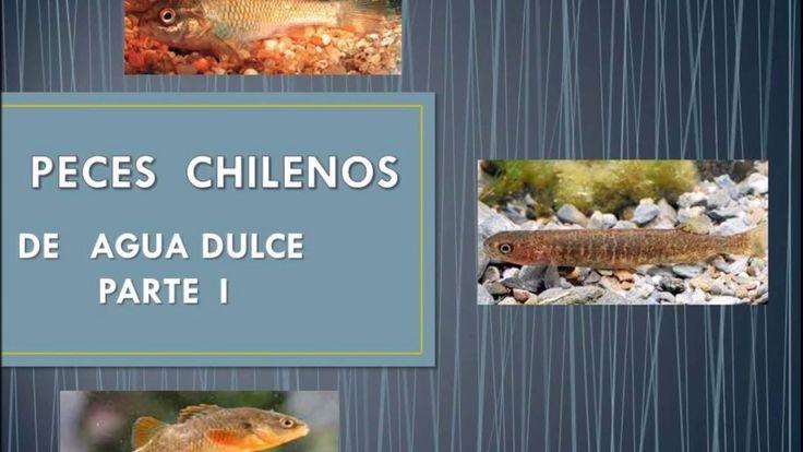 Peces de Agua Dulce  Chilenos 1era. Parte.