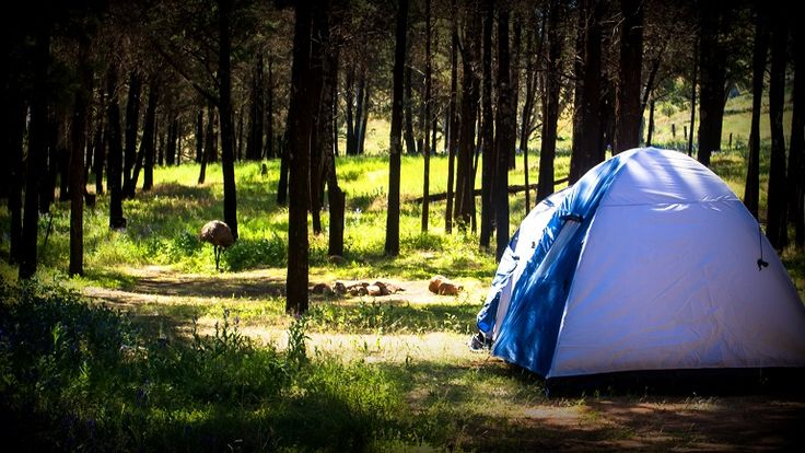 We had to share our camping space with the locals :D
