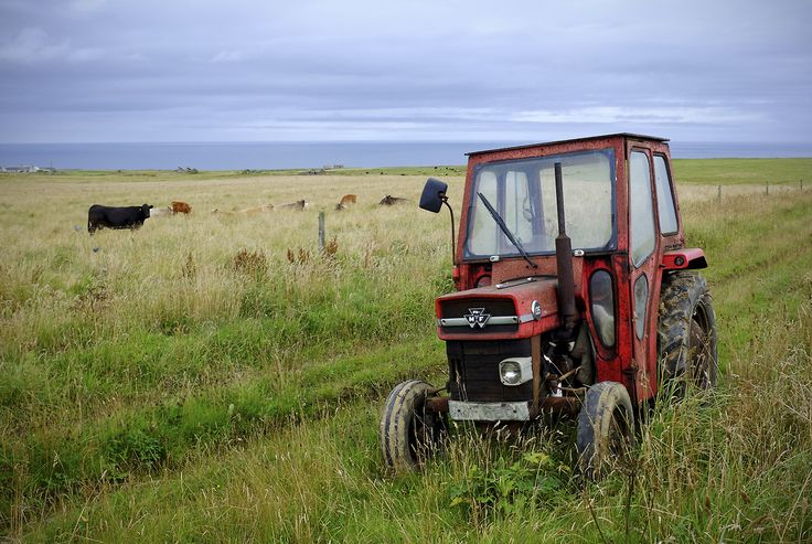 Massey 135. HAD ONE OF THESE TOO