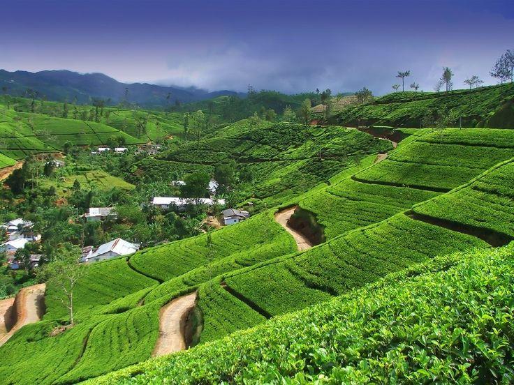 Шри-Ланка - чайное царство - Путешествуем вместе