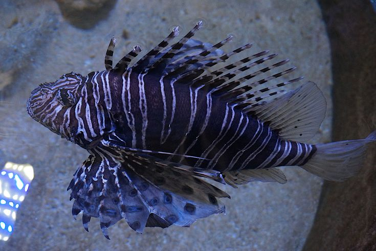 It's amazing the different #creatures found in the #ocean while #diving you can find