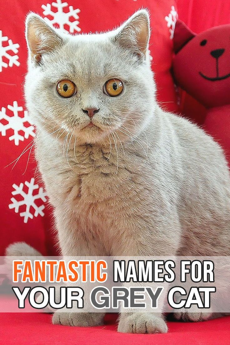 Huge list of names for your grey feline! | Best Cat Quotes