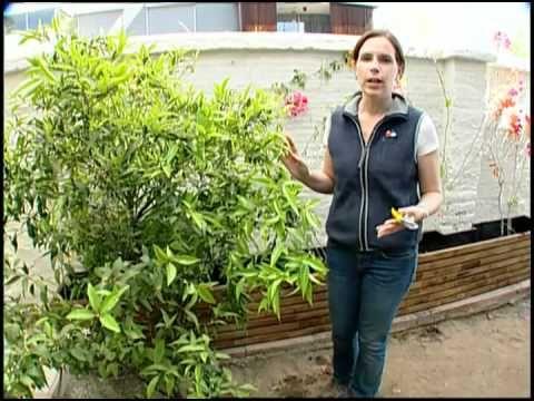 9 best jardin images on pinterest small gardens garden - Como decorar el jardin ...