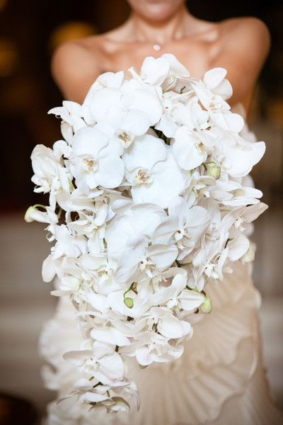 Stunning and classic all-white cascading bouquet by Amaryllis Inc.