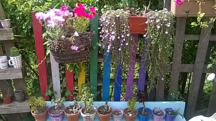Mi jardin vertical