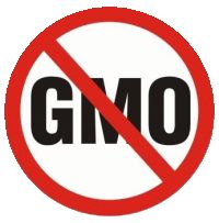 Research Indicates That GMO Could Be a Cause of Infertility