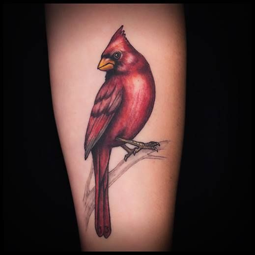 Cardinal Bird Tattoo Color Realism by DSD  Done@ Tattoo Nouveau Lake Orion, Mi