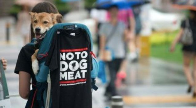 Almost all the dog meat restaurants in Pyeongchang county have defied a government request to stop serving the food, an official admitted Thursday.