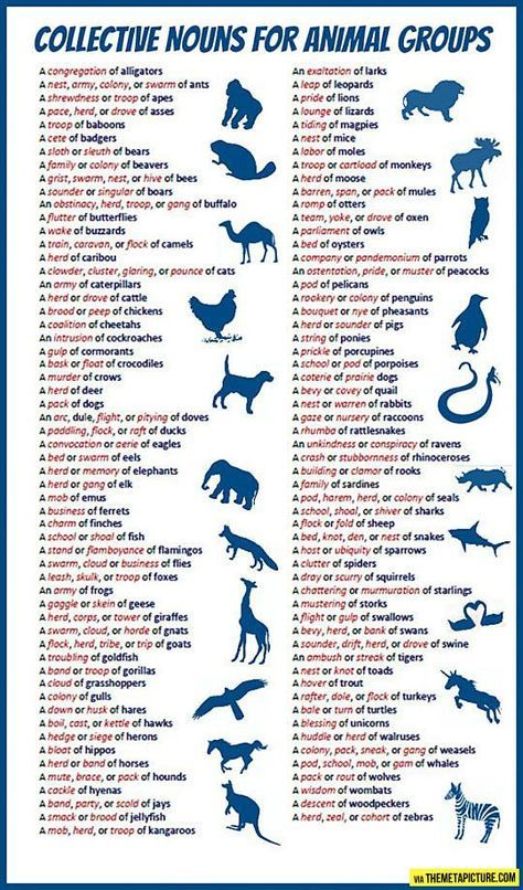 Collective nouns for animals… Collective nouns, Learn