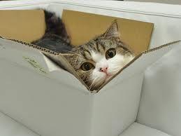 Maru Loves Boxes~~