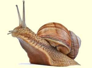 I am terrified of snails